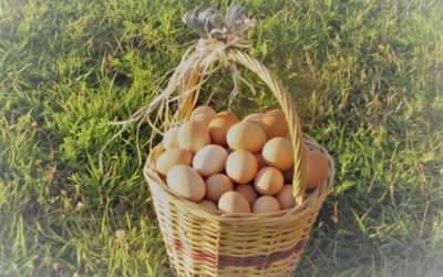 Ventajas de consumir huevos de gallinas criadas libremente
